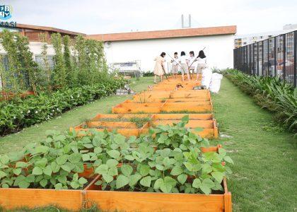 11-Garden (3)